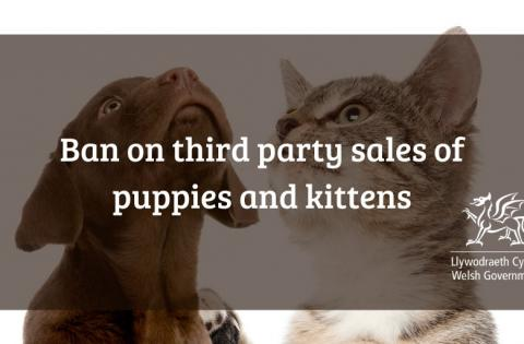 Consultation on Third Party Sales of Puppies and Kittens